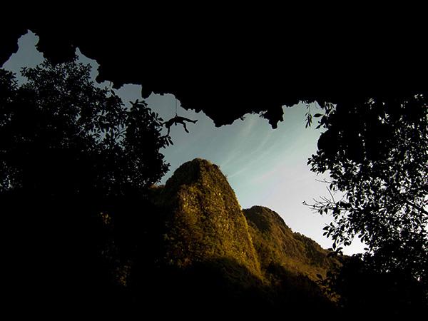 Green climber's garden, Laos